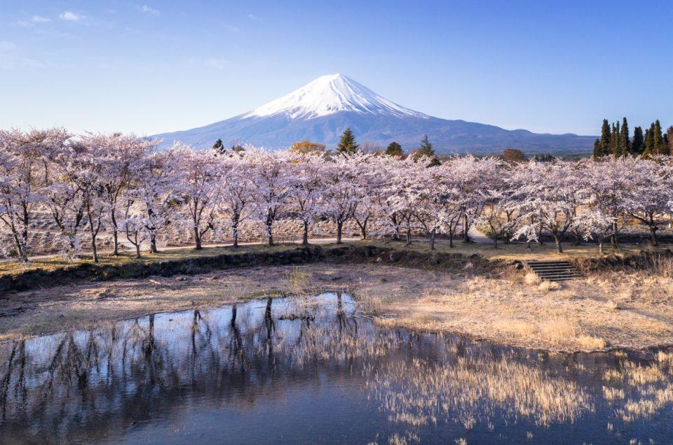 富士山と桜を空撮