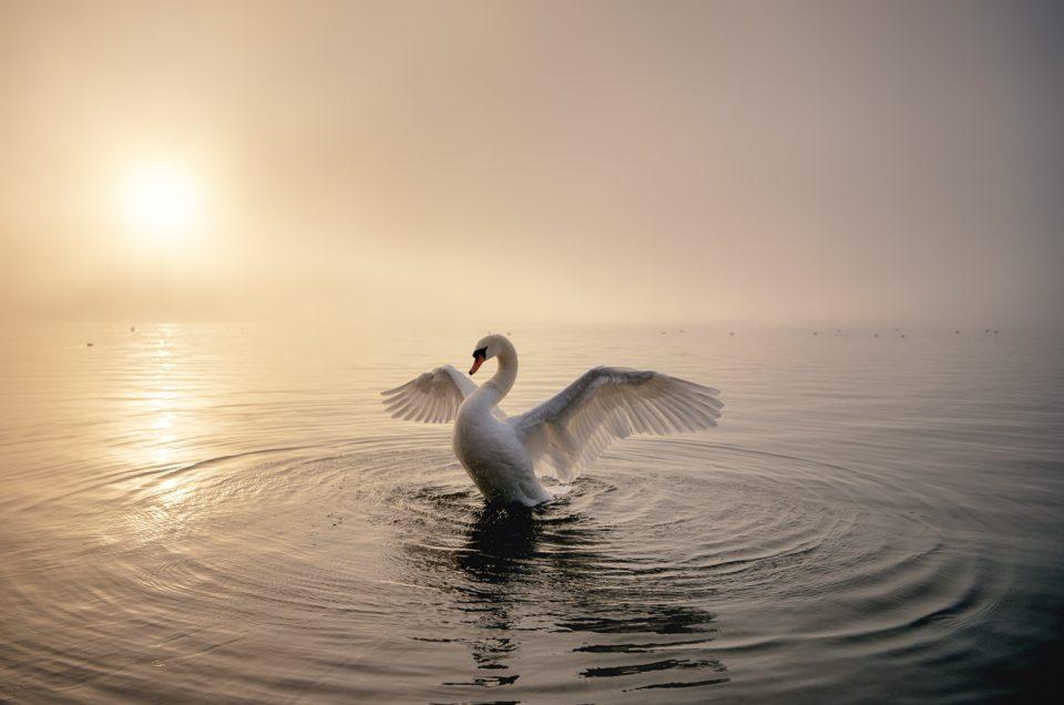 白鳥の湖…山中湖